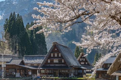 世界遺産五箇山菅沼集落の春景色