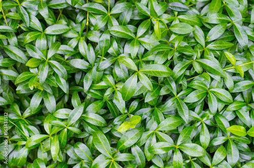 Green leaf background - 163438512