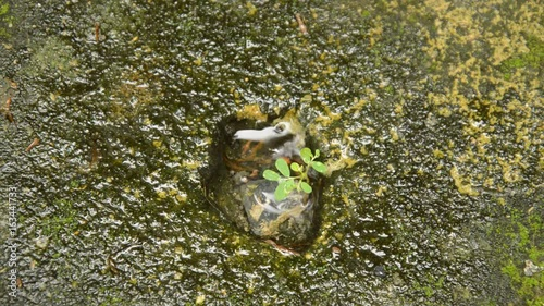 In de dag Stenen little plant growth from cracking cement ground with falling rain