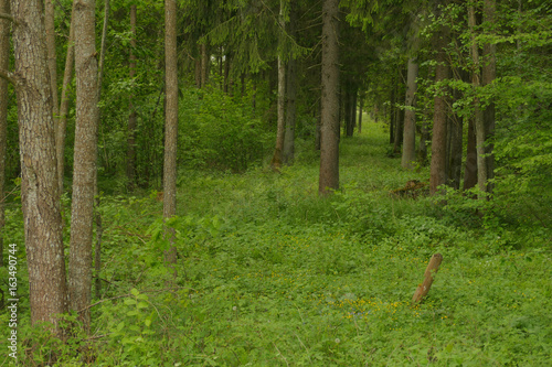 Rudna Forest is one of the largest forest complexes in the vicinity of Vilnius. Place of residence of the Polish national minority.