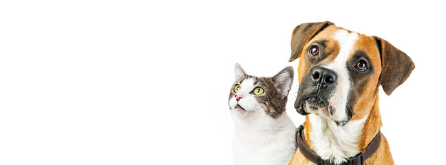 Dog and Cat Together on White Horizontal Banner © adogslifephoto