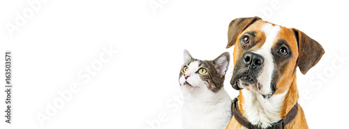 Fotobehang Kat Dog and Cat Together on White Horizontal Banner