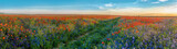 Big Panorama of poppies and bellsflowers field with path - 163510929