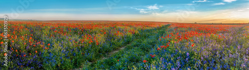 Fotobehang Klaprozen Big Panorama of poppies and bellsflowers field with path