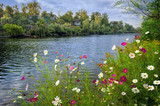 Beautiful flowers over river - 163531706