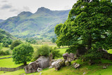 Beautiful landscapes in Lake District National Park, England, stone wall, cows, mountains on the background, selective focus - 163544705