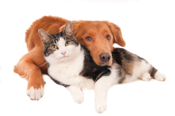 Cat and dog together in a friendly pose, looking at camera. Isolated on white