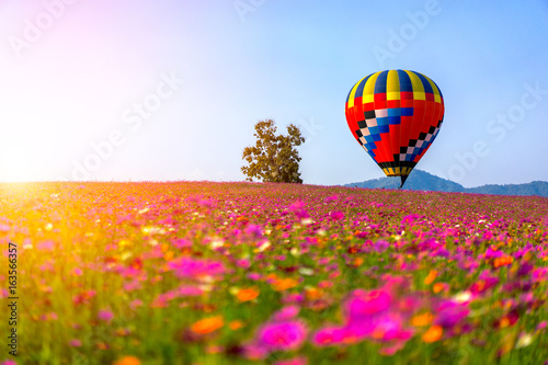 Foto op Canvas Klaprozen Landscape of beautiful cosmos flower field and hot air balloon on sky sunset