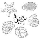 Set of seashells isolated on white background. Hand lettering. Hand drawn vector illustration.