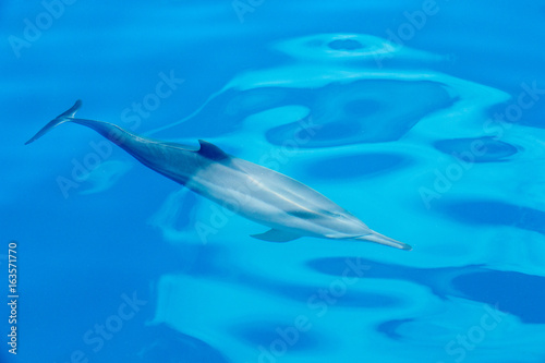 Fototapeta happy dolphins in the water