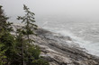 Rocky Coastline of Maine in the fog