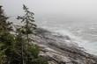 Rocky Coastline of Maine in the fog
