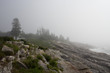 Foggy Morning along the Coast