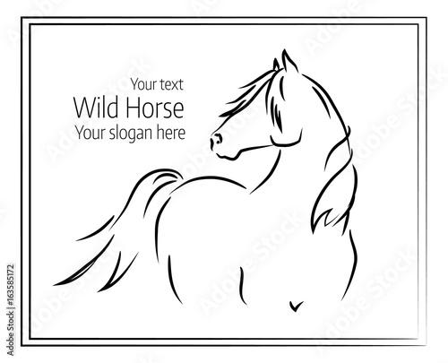 Hand drawn vector illustration of wild horse