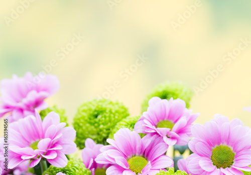 Easter, spring flowers background. More flowers.