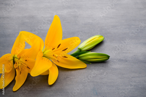 Lily flower with buds on a gray background. Poster