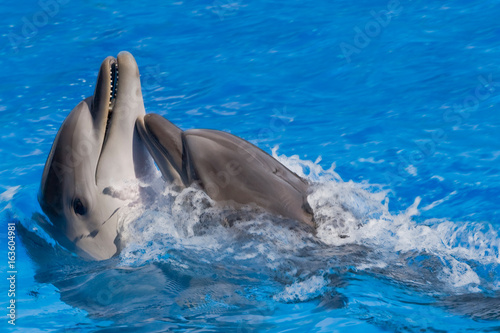 Two dolphins play
