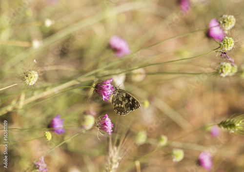 butterfly feeding in flowers spring background