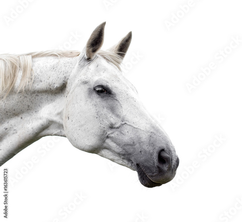 White horse on white background - 163615723
