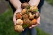 Fresh woodland fungi with boletus mushrooms - 163619510