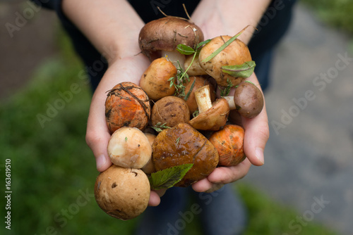 Fresh woodland fungi with boletus mushrooms
