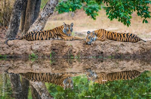 Siblings Reflection