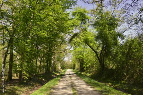 Chemin dans l'uni vert de la forêt