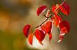 Leinwanddruck Bild - Herbstblätter