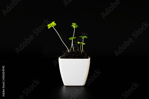 Young plant in a white ceramic pot over black background-Used for home decoration.