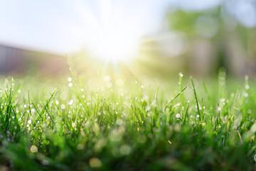 Grass field in sunny morning