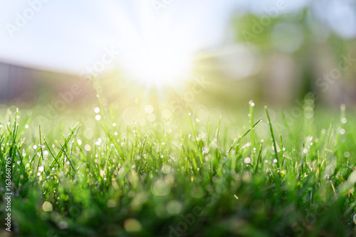 Foto op Canvas Gras Grass field in sunny morning