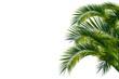 Leinwandbild Motiv Palmenblätter, palme freigestellt vor weißem hintergrund