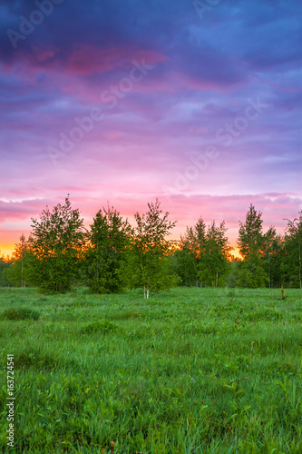 Foto op Canvas Lichtroze summer rural landscape with forest, a meadow and sunrise