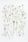 Flowers composition. Pattern made of pink gypsophila flowers and daisy flowers on white background. Flat lay, top view, copy space
