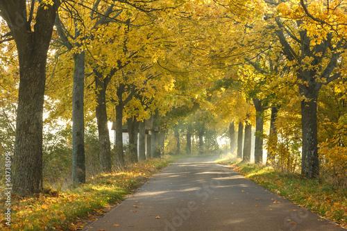 Autumn road / North Poland
