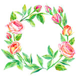 Floral wreath.Garland of a roses branches.Frame of a herbs.Watercolor hand drawn illustration.It can be used for greeting cards, posters, wedding cards.
