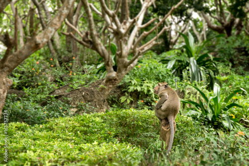 single monkey sit on stump in Thailand tropical forest with copy space