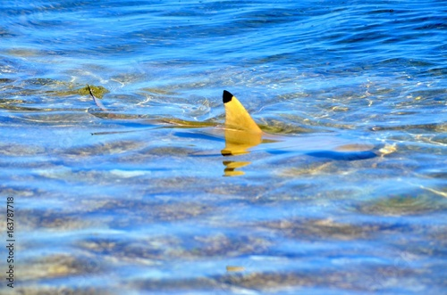 Fotobehang eau bleu ocean mer nature poisson requin aileron