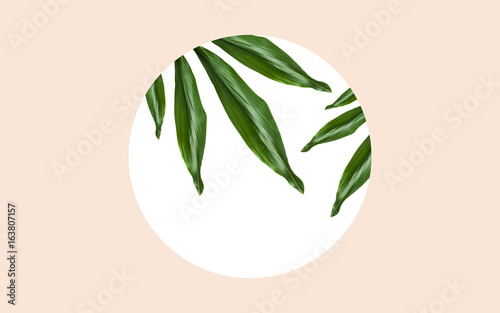 green leaves over round frame on beige