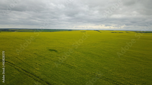 Summer mountain landscape with agricultural field