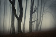 old trees in scary forest