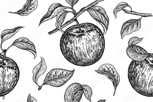 Materiał do szycia Seamless pattern. Realistic fruit, branch and apple tree leaf. Black and white vegetarian food. Vector illustration art. Vintage engraving. Hand drawing. Template with nature motifs for kitchen design