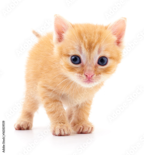 Kitten on white background. Poster