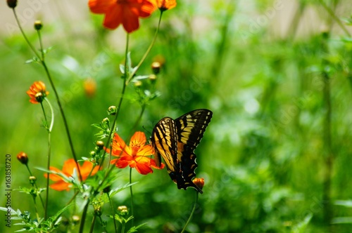 Butterflies and Bees Among Beautiful Wildflowers in a Field