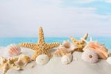 Seashells - 163876740