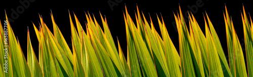 Foto op Canvas Verse groenten palmes, fond noir