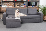 golden retriever dog lying on sofa with tv remote control, newspaper and eyeglasses