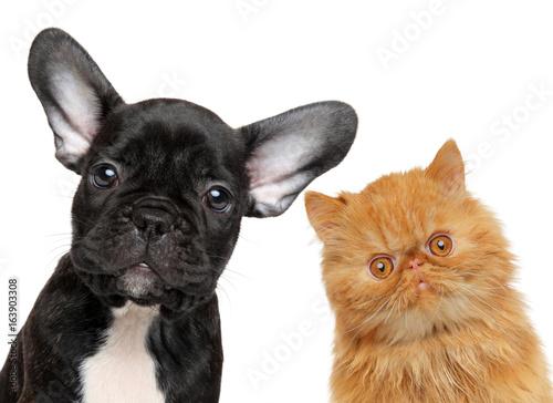 Deurstickers Franse bulldog Dog and cat head isolated
