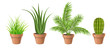 Different plant collection in pot for home decoration, including cactus, aloe vera, palm and grass. Vector illustration, isolated on white.