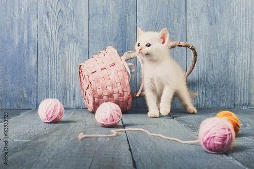 White kitten at blue wood - 163933928